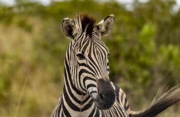 12 Days Uganda Safaris And White Water Rafting