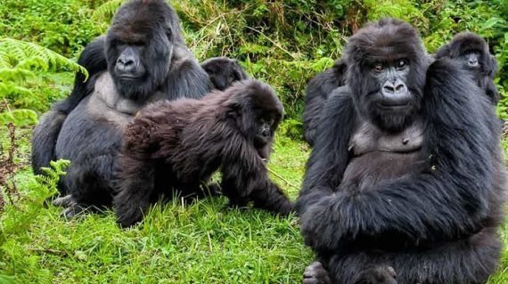 12 Days gorilla trekking and wildlife Safari