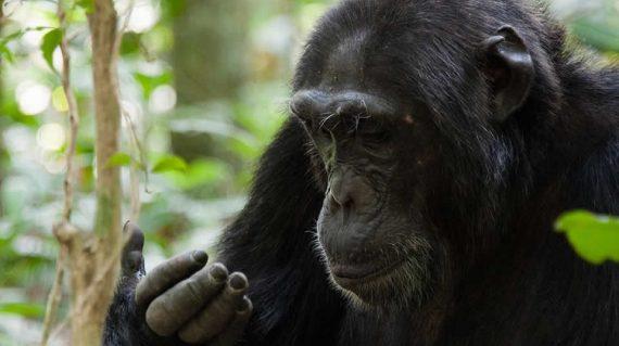 12 Days gorilla trekking and wildlife Safari tour