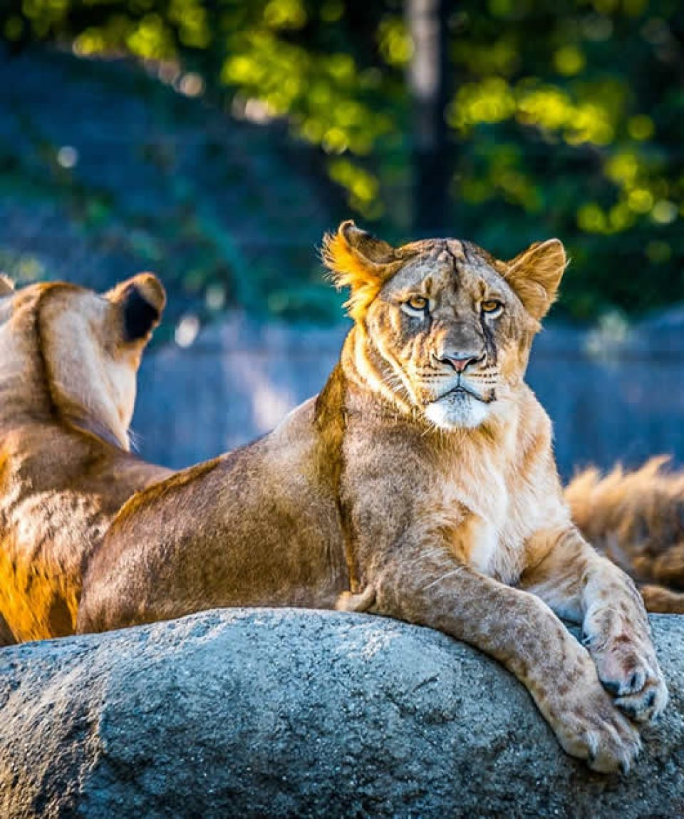 4 Days Murchison Falls National Park Luxury Safari