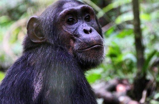 9 Days Uganda Wildlife Tour And Primate Safari, Contact Vibrant Holiday Safaris