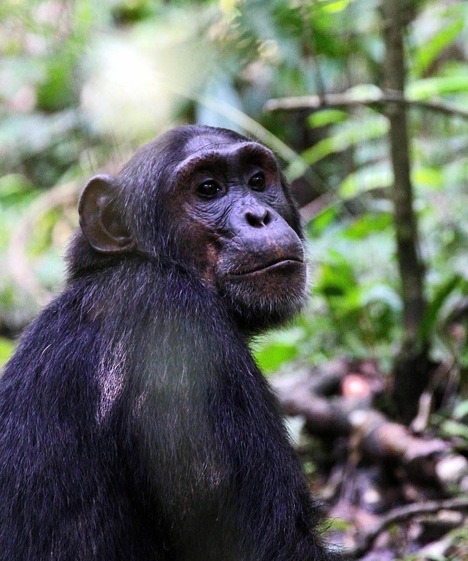 9 Days Uganda Wildlife Tours Primate Safari