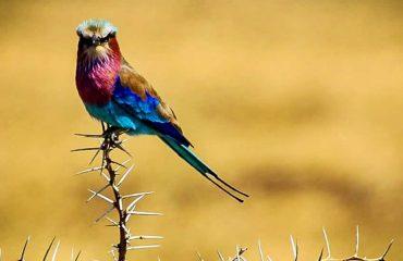 Birding tour in queen elizabeth national park
