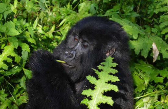 8 Days Wildlife And Primate Safari In Uganda