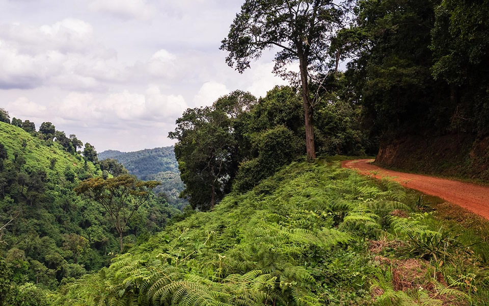 How to access Bwindi Impenetrable Forest National Park?