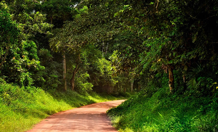 How to access Kibale Forest National Park?, How to access Mgahinga gorilla National Park