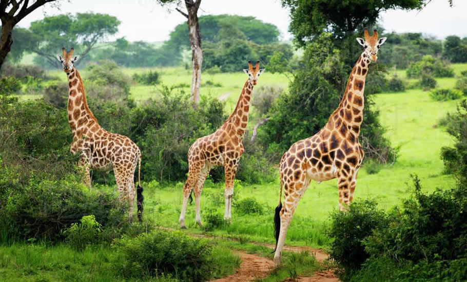 Mammals found in Murchison Falls National Park