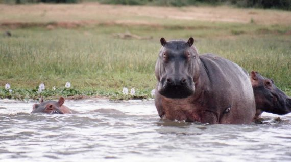 Murchison Falls National Park Hipos