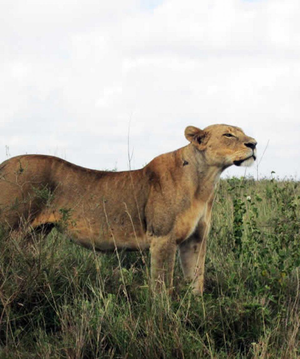 Murchison Falls National Park and Chimpanzee Tracking