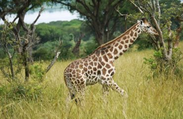 Murchison Falls Wildlife Tours