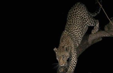 Night Game Drive on Murchison Falls National Park Luxury Safari