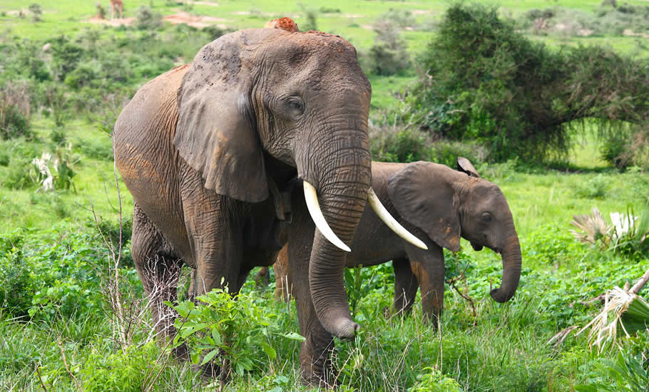What to do at Kidepo valley National park?