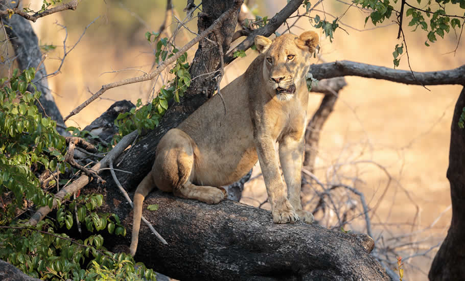 What to see in Queen Elizabeth National Park?