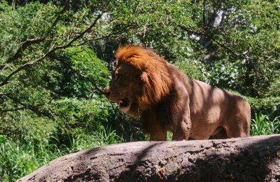 18 Days Best Uganda Classic Wildlife Safari