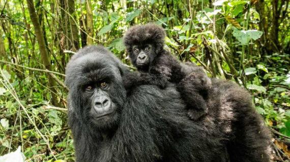 Uganda Gorilla Trekking And Wildlife Tour