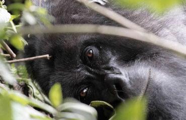 Uganda Gorilla Trekking And Wildlife Tours
