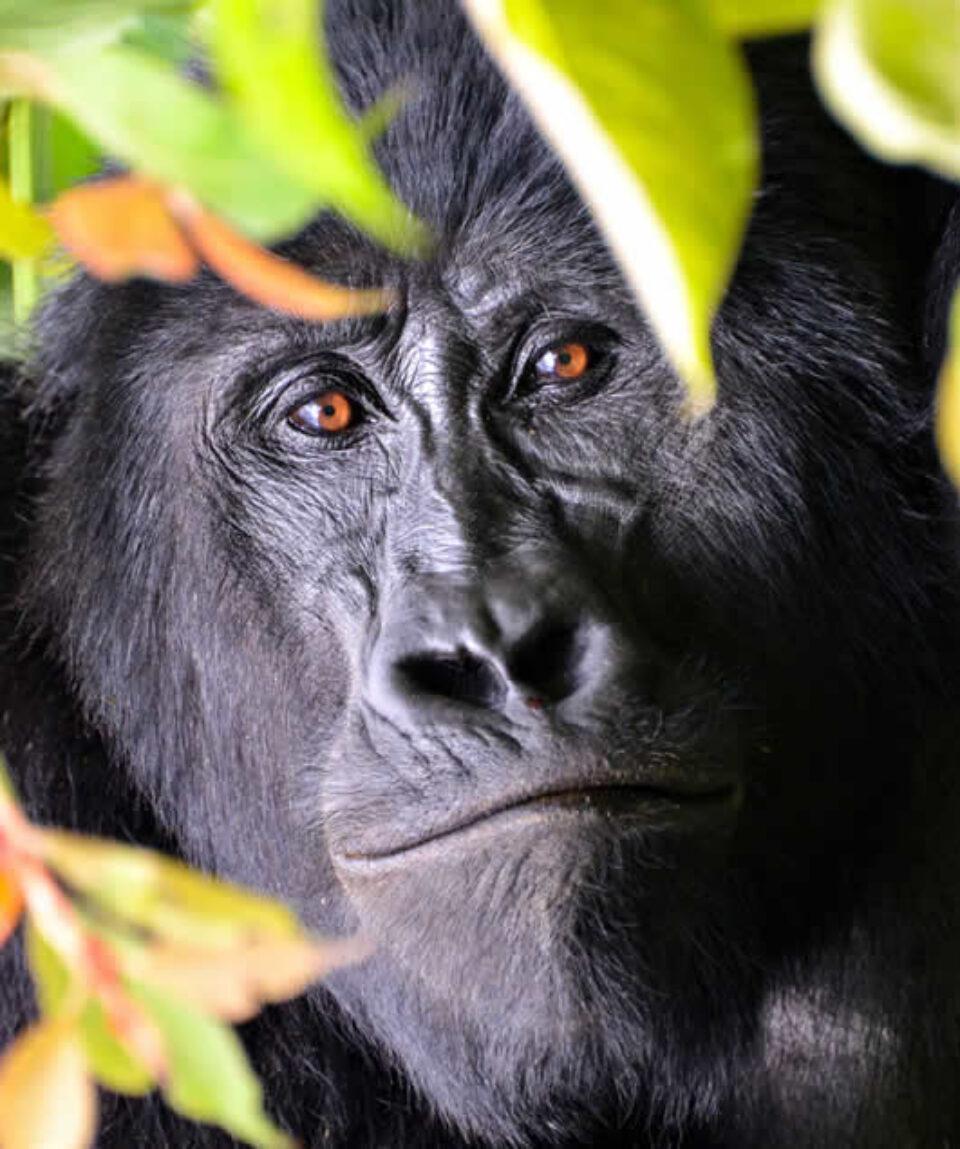 Uganda Gorilla Trekking & Wildlife Toura