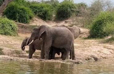 Uganda Safari White Water Rafting