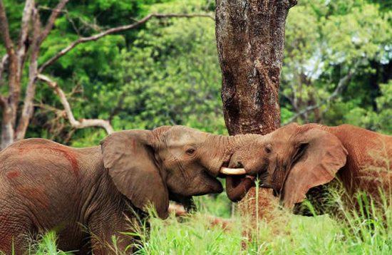 10 Days Uganda Tour With Gorilla Tracking Safari