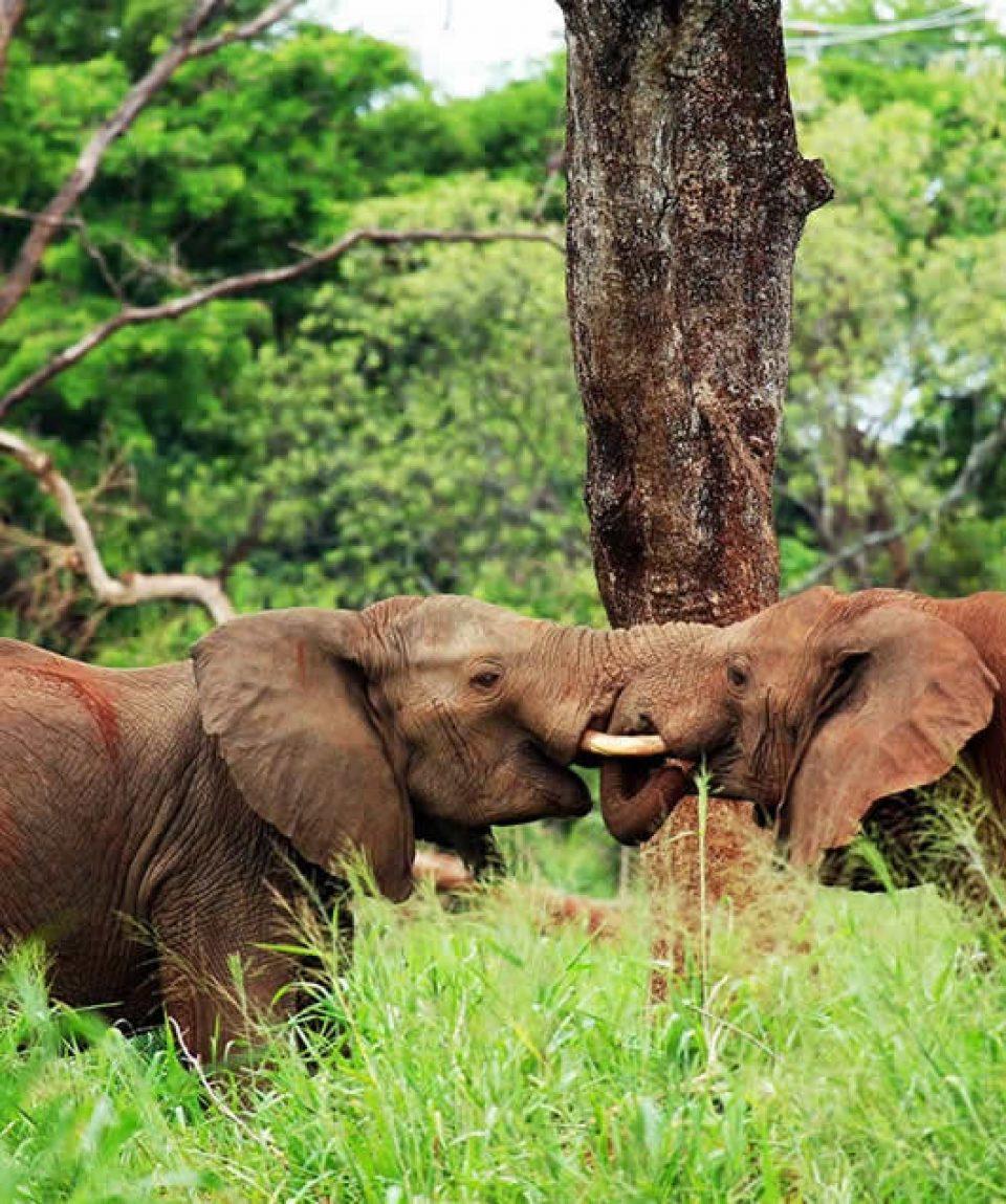 Uganda Tour With Gorilla Tracking