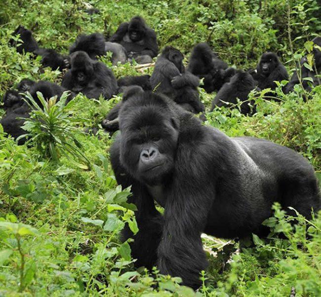 4 Days Uganda gorilla trekking tour to Bwindi impenetrable national park