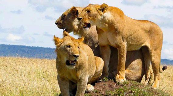 Uganda wildlife tour With Gorilla safaris