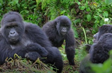 Uganda wildlife tours With Gorilla safari