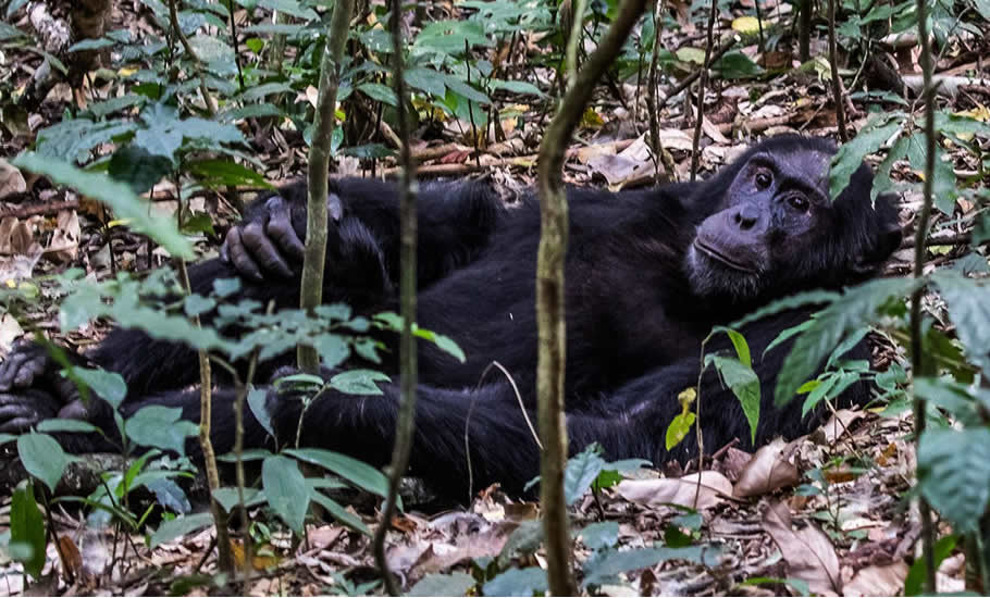 What to do in Kibale Forest National Park?