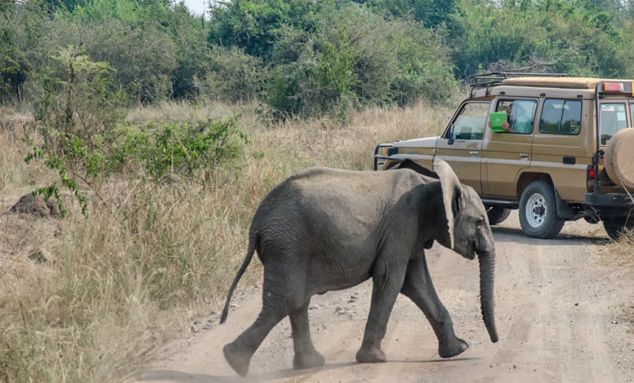 What to do in Queen Elizabeth national park?