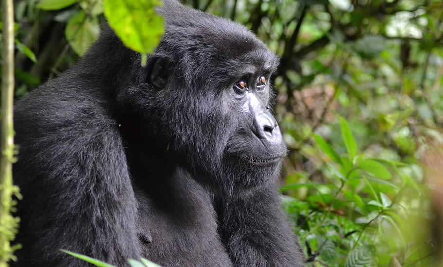 What to see in Bwindi Impenetrable Forest National Park?
