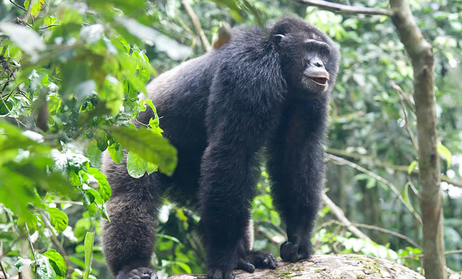 What to see in Kibale Forest National Park?