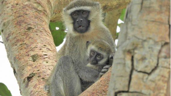 Wildlife Safari And Primate Tour