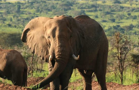 3 Day Safari To Murchison Falls National Park