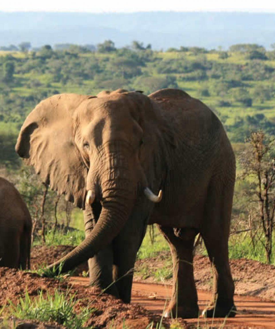 Wildlife Safaris To Murchison Falls National Park
