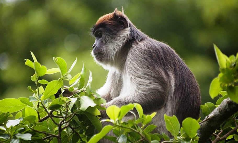 Wildlife species at Kibale National Park