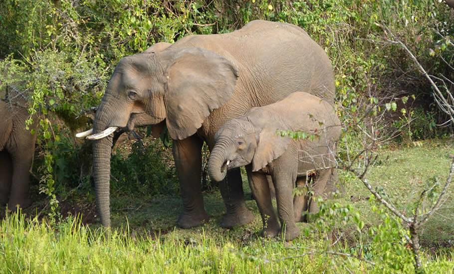 Wildlife species of Mountain Elgon National Park