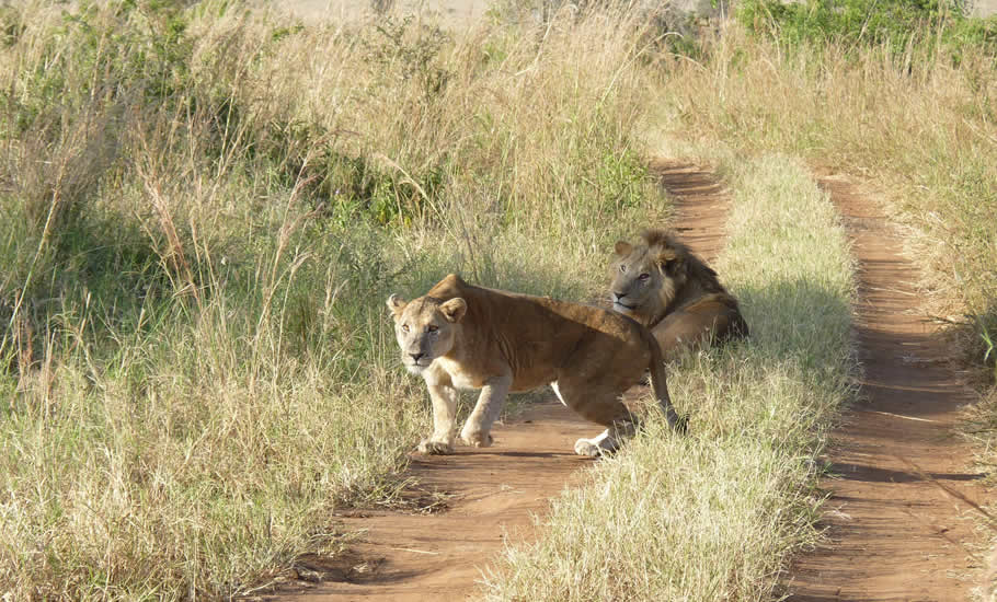 How to access Kidepo Valley National park?