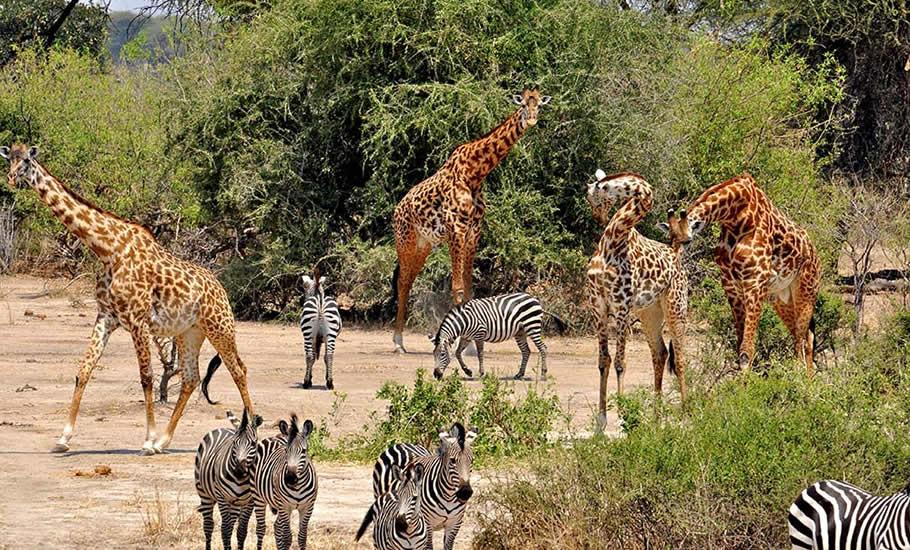 Mammals found at Kidepo valley national Park