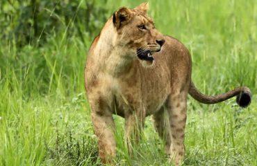 big fives Murchison Falls National Park uganda