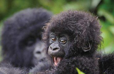 gorilla tour to Bwindi impenetrable national park