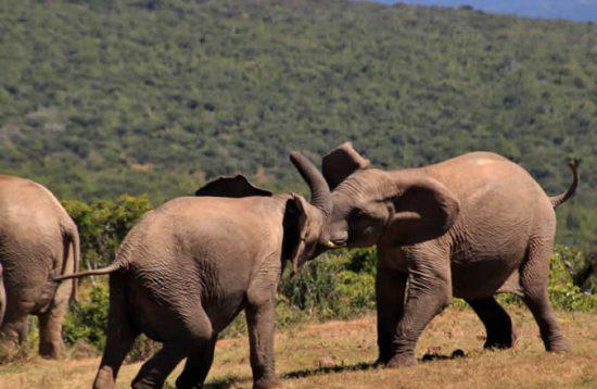 7 days wildlife Tour and gorilla Tracking safari Uganda