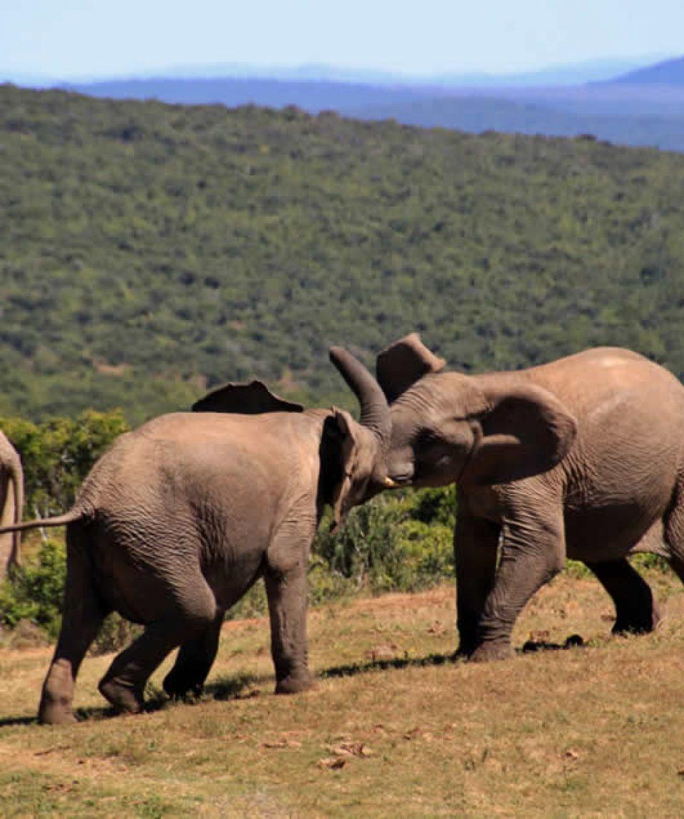 wildlife and gorilla safari