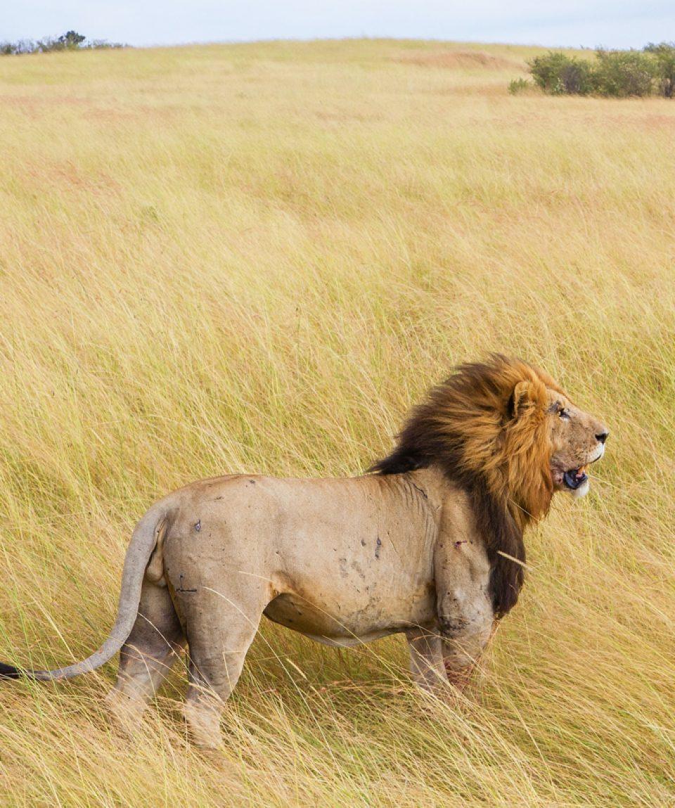 1 Day Akagera National Park Rwanda Safaris