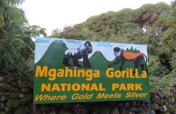 Mgahinga gorilla permit