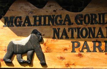 Mgahinga gorillas flying safari
